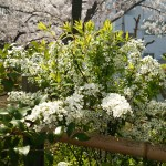 綺麗な白い花