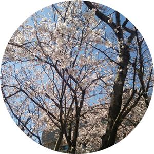 上ヶ池公園でお花見撮影会しました~!