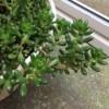 勝手に育ってる観葉植物たち