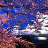 夜桜を見に出かけよう!
